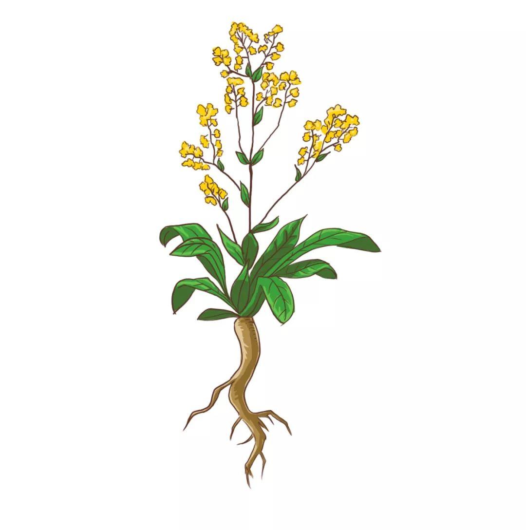 植物染-1